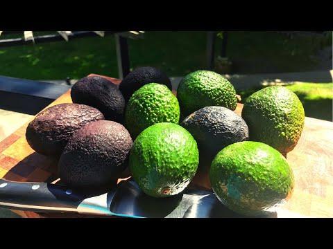 Как порезать авокадо? Как едят авокадо?  Как выбрать авокадо?
